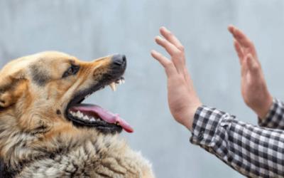 Cómo defenderse ante el ataque de un perro